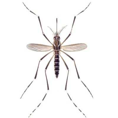 EliminateDengueMosquito